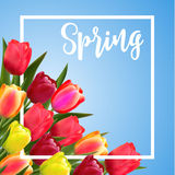 Spring text with tulip flower. Royalty Free Stock Photo
