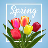Spring text with tulip flower. Royalty Free Stock Photos