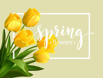 Spring text with  tulip flower. Vector Royalty Free Stock Image
