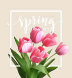 Spring text with  tulip flower. Vector Stock Photo
