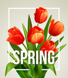 Spring text with  tulip flower. Vector Stock Images