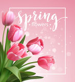 Spring text with  tulip flower. Vector Royalty Free Stock Photos