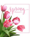 Spring text with  tulip flower. Vector Stock Photos
