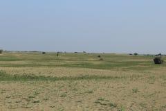 Spring 2017 thall desert. Chikpea fields in the thall desert spring 2017 Royalty Free Stock Photos