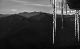 Black and White Icicles at Sunrise in Cascade Mountains Stock Photography