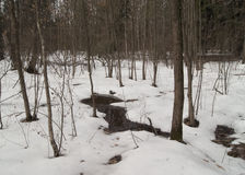 Spring thaw. Melting snow in the spring forest Royalty Free Stock Photography