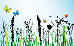 Spring theme. Withd colored flowers and butterfly Stock Photography