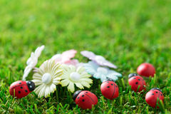 Spring theme Royalty Free Stock Photography