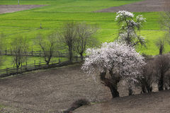 Spring in the Tibetan Plateau Royalty Free Stock Photos
