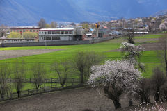Spring in the Tibetan Plateau Stock Photos