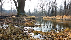Spring tide and dry grass in forest stock video footage