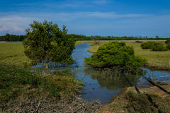 Spring tide in mangrove forest Stock Images