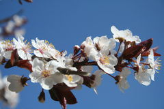 Spring time. Branch with beautiful flowers Stock Images