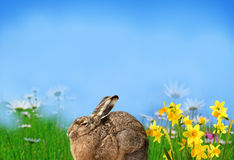Spring time. Spring meadow with little hare and flowers Royalty Free Stock Image