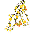 Spring time. Illustration of a branch with yellow blossoms Royalty Free Stock Photos