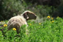 Spring Time. Picture taken at the field in Israel Royalty Free Stock Photos