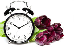 Spring time. Old fashion alarm clock with violet tulips Stock Images