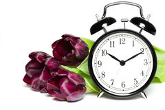 Spring time. Old fashion alarm clock with violet tulips Stock Photography