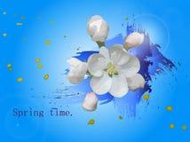 Spring-time-17 Photo libre de droits