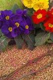 Spring - time Stock Photos