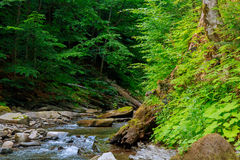Spring time along the Little Pigeon River in the Stock Image