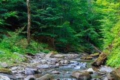Spring time along the Little Pigeon River in the Royalty Free Stock Image