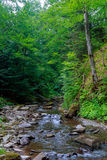 Spring time along the Little Pigeon River in the Stock Photos