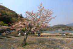 Spring time at Arashiyama, Japan. Sakura spring time at Arashiyama, Japan Stock Image