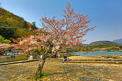 Spring time at Arashiyama, Japan. Sakura spring time at Arashiyama, Japan Stock Photography