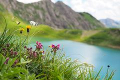 Spring time in the Austrian Alps. Fresh green grass, colorful flowers and a turquois mountain lake in northern Austria in spring time royalty free stock images