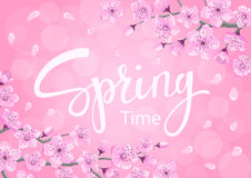 Spring time background with cherry blossoms flowers Royalty Free Stock Image