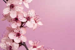Spring Time Background Stock Photo