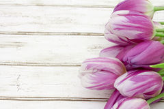 Spring Time Background royalty free stock photos