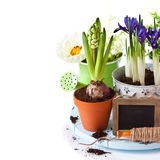 Spring time. Royalty Free Stock Image