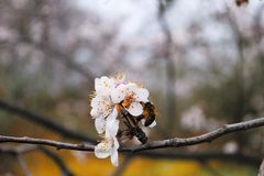 Spring time bees Stock Images
