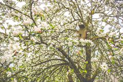 Spring time, blooming tree royalty free stock images