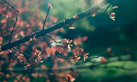 Spring time. Blossom plants. Closeup royalty free stock photo