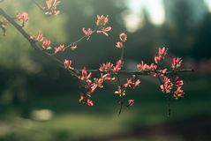 Spring time. Blossom plants. Closeup stock images
