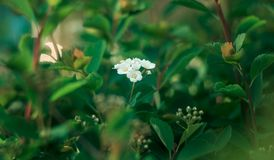 Spring time. Blossom plants. Closeup royalty free stock photography