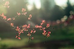 Spring time. Blossom plants. Closeup royalty free stock photos