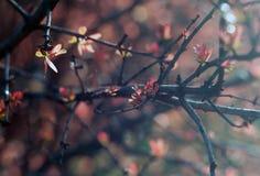 Spring time. Blossom plants. Closeup stock image