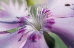 Spring time. Blossom plants. Closeup stock photos