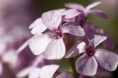 Spring time. Blossom plants. Closeup stock photo