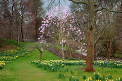 Spring time at Bodnant gardens Stock Photo