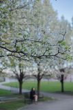 Spring time in Chicago. Early morning Spring time in Chicago royalty free stock photography