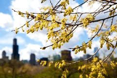 Spring time in Chicago, Illinois. Royalty Free Stock Photography