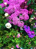 Spring time, colours, flowers, hortensia and magic pattern royalty free stock photos