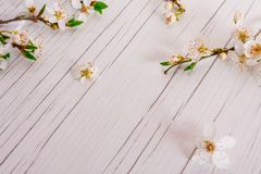 Spring time concept, Easter, flowers background. Spring time, Easter, flowers background. Beautiful flowers of wild plum on the white, wooden table. Spring royalty free stock photography