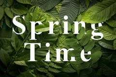 Spring time concept of wild green jungle foliage. Top view of creative layout made out of wild forest leaves. Flat lay foliage. spring time concept stock photo