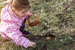 Spring time- cute little girl picking snowdrop flowers in spring. In natural Stock Photography